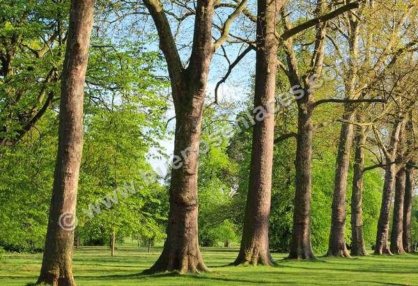 fotos de arboles, 1: árboles en un parque