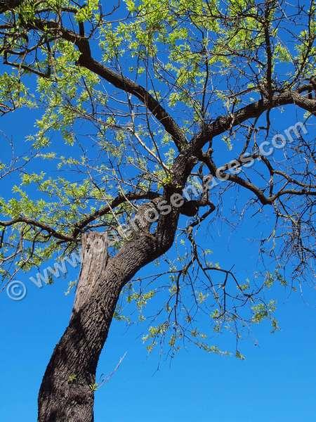 imágenes de arboles, 2: ramas de un árbol