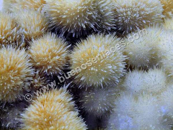fotos de minerales, 6: aragonita