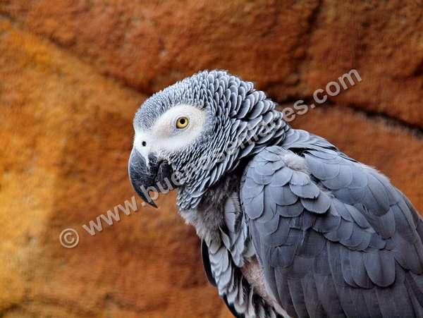 fotos de mascotas, 4: loros, fotos de aves tropicales