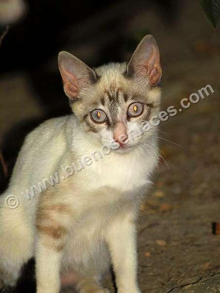 imágenes de mascotas, 6: gatos como mascotas
