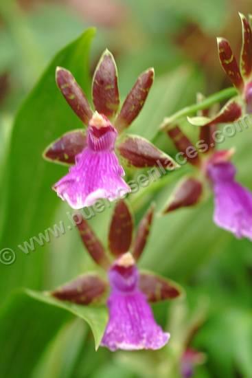 imágenes de orquideas, 4: orquídeas como plantas ornamentales