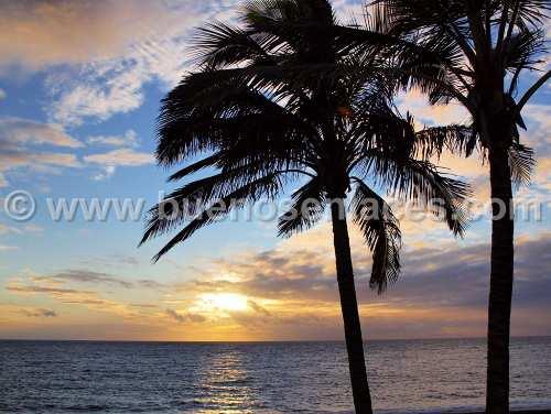 fotos de paisajes naturales, 1: paisaje con palmeras