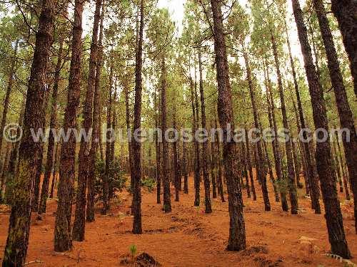 fotos de paisajes naturales, 2: paisaje de bosque