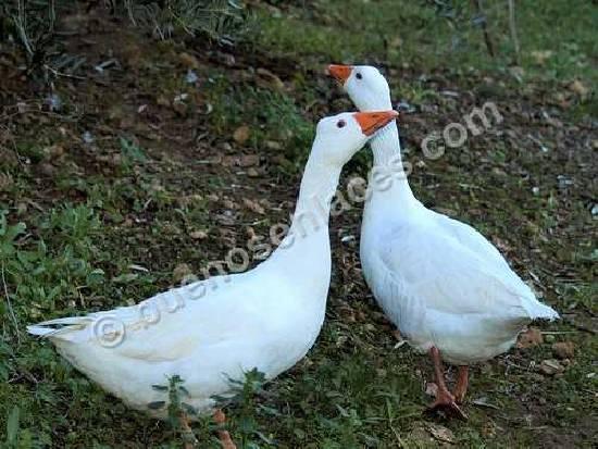 pareja de animales