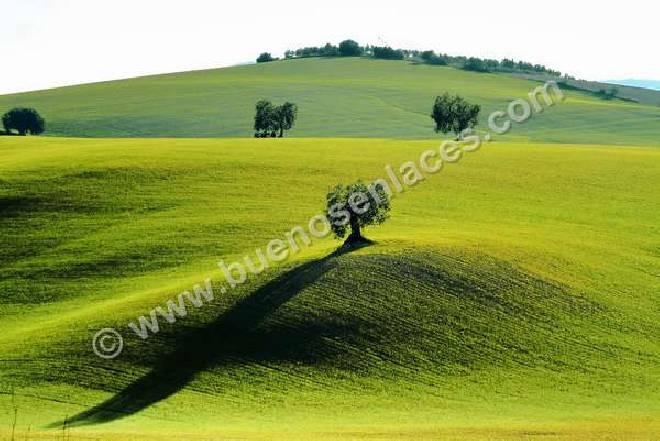 olivos en un prado