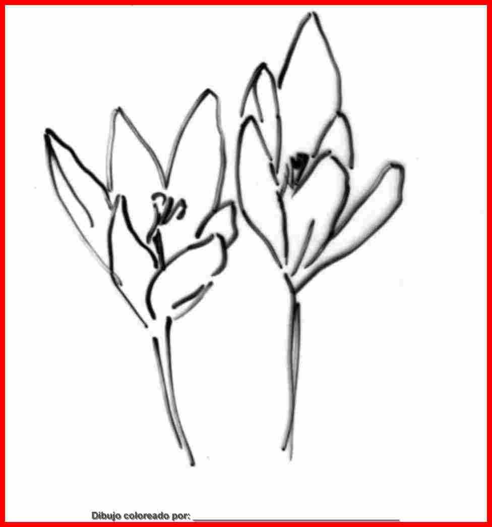 Principios Basicos Feng Shui likewise 2013 09 01 archive also Pintura likewise 10644 besides Desenhos De Flores Rosas Coloridas. on rosas para pintar