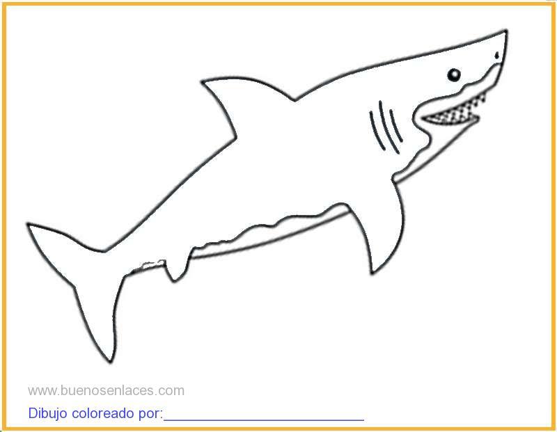 Dibujo De Tiburon Para Colorear E Imprimir