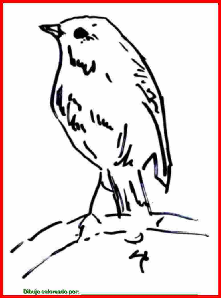 Hermosa Pájaro Imprimible Para Colorear Ornamento - Dibujos Para ...
