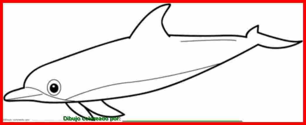 Dibujos De Animales Acuaticos Para Colorear E Imprimir: Dibujo De Animales Marinos Para Colorear E Imprimir
