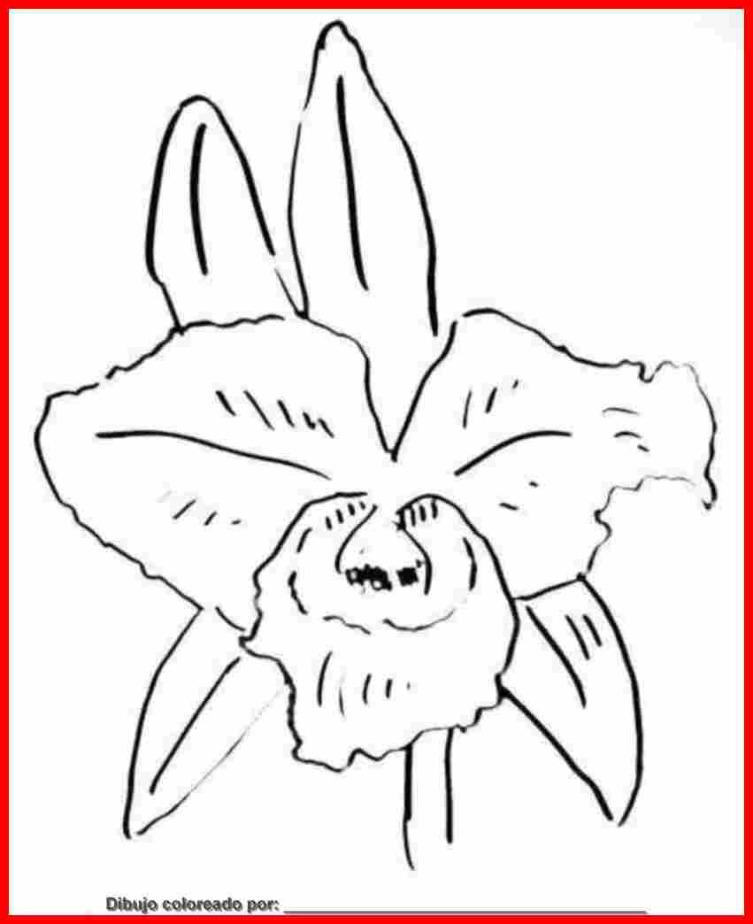 dibujo de orquideas para colorear e imprimir.