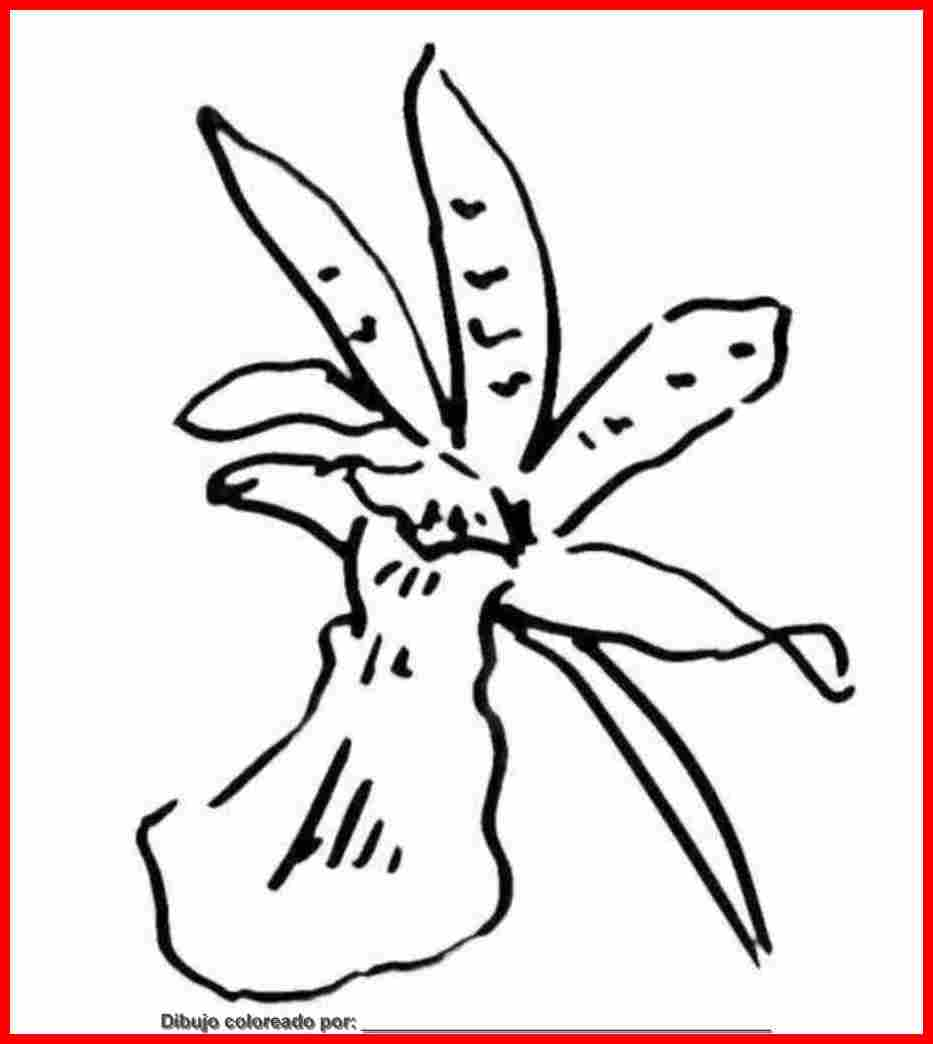dibujo de orquidea para colorear e imprimir.