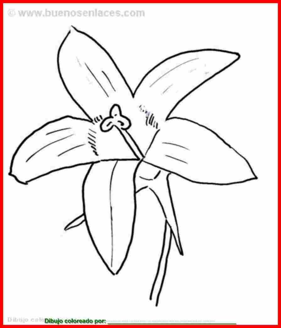 Dibujo de flor de campanula para colorear, imprimir y pintar sobre