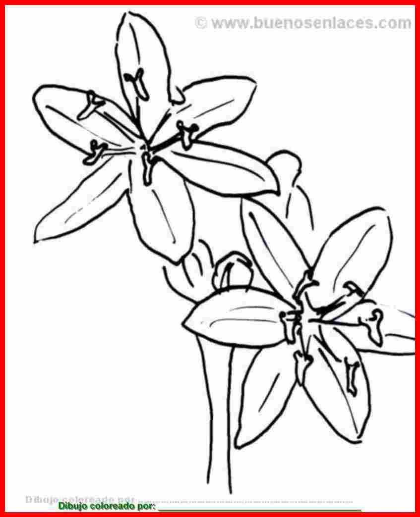 Dibujo De Flores Silvestres Para Colorear  Imprimir Y Pintar Sobre