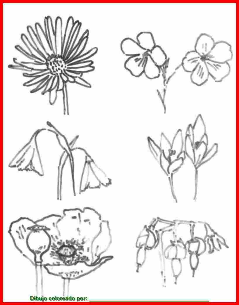 Flores. Dibujos de flores para colorear, pintar e imprimir