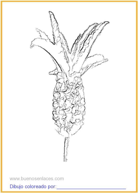 dibujo de flor de lavanda para colorear e imprimir