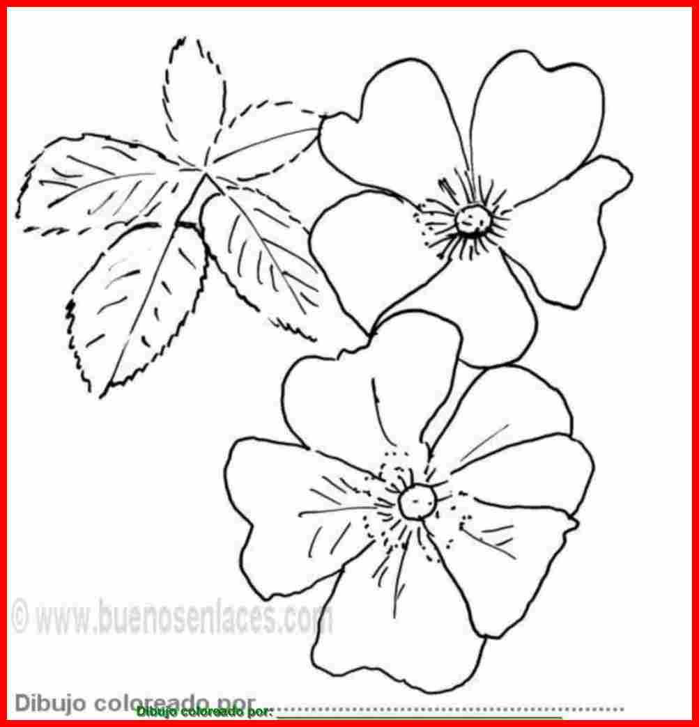 Dibujo de dibujo de rosas silvestres para colorear, imprimir y pintar ...