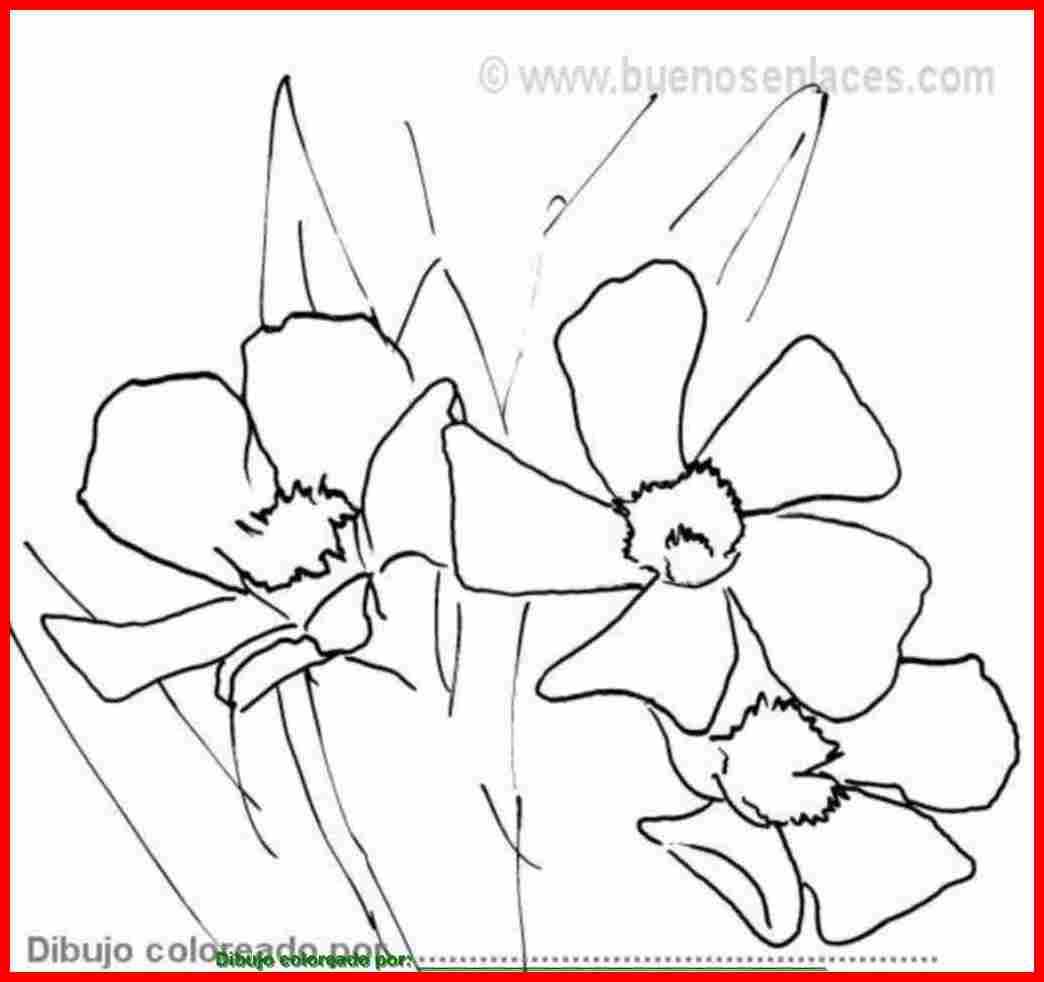Dibujo de flores para colorear e imprimir for Plantas ornamentales para colorear