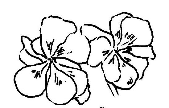 Dibujo de geranios para colorear e imprimir for Plantas ornamentales para colorear