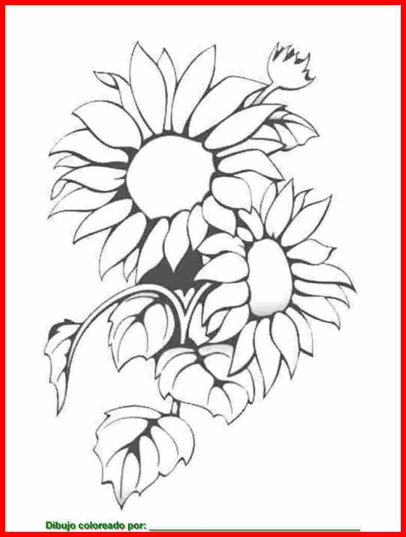 dibujo de girasoles para colorear e imprimir