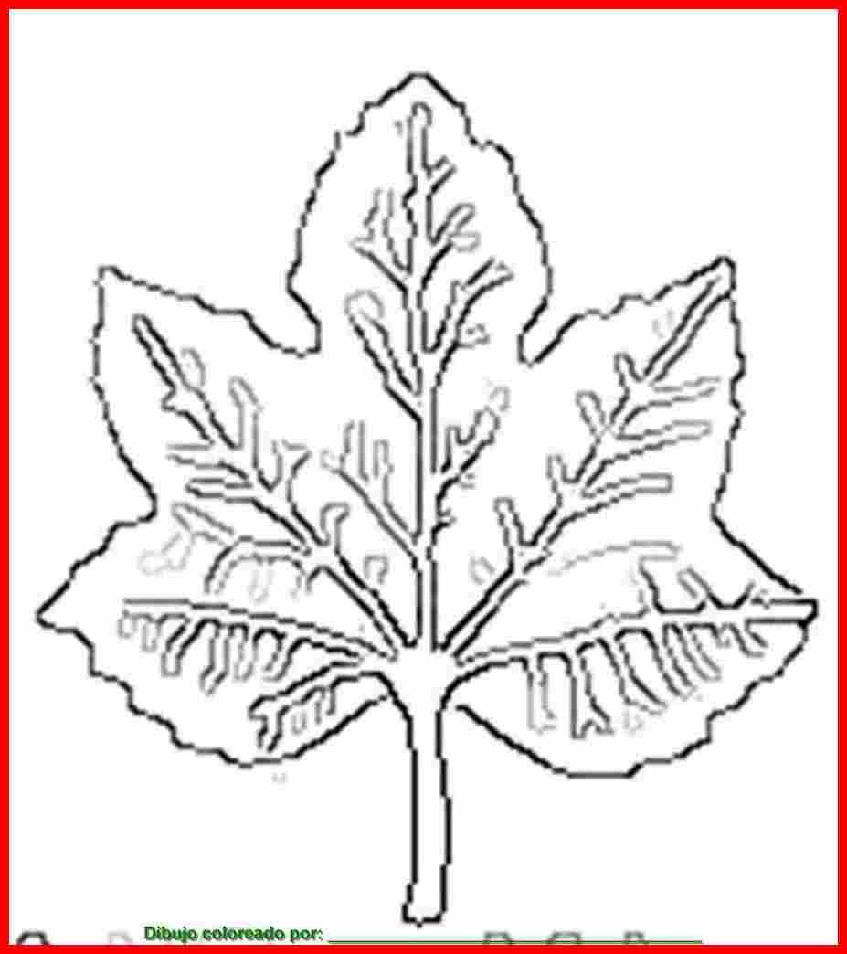 Dibujo De Hoja De Planta Para Colorear E Imprimir