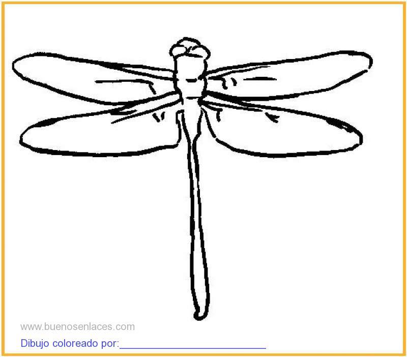 Dibujo de libelulas para colorear e imprimir - Fotos de insectos para imprimir ...