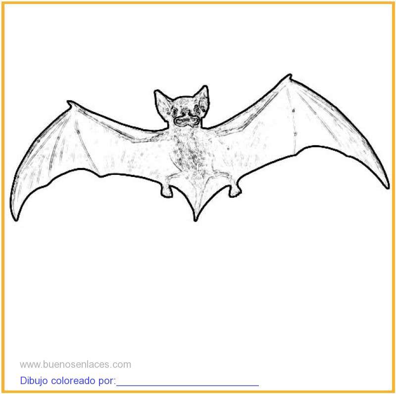 maestra de infantil animales domsticos para colorear. mamiferos para ...