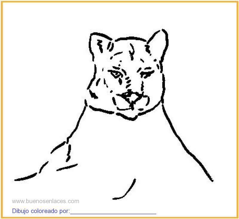 Dibujo De Puma Para Colorear E Imprimir