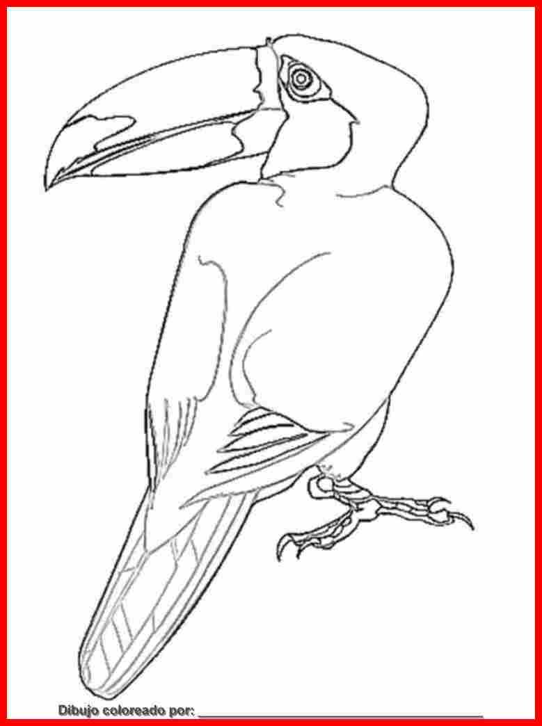 dibujo de aves para colorear e imprimir.