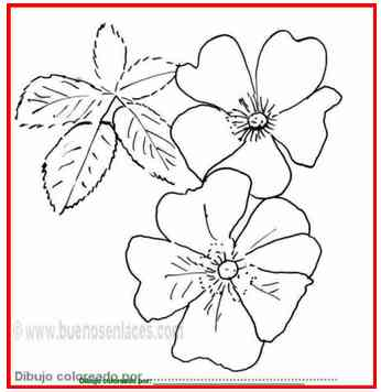 flores para colorear: dibujo de rosas silvestres