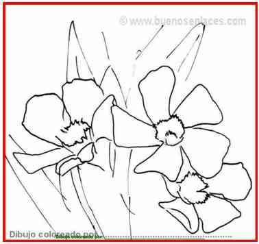 dibujos de flores: flores de adelfa