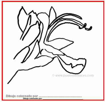 dibujos de flores: flor del romero
