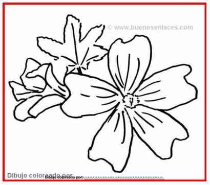flores para colorear: flores para pintar, malva silvestre