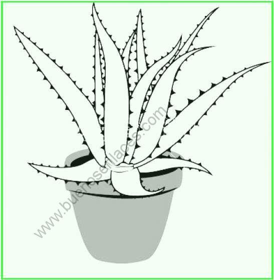 dibujos de plantas_medicinales