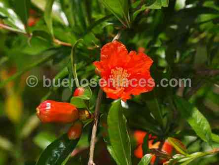 Fotos de plantas curativas y medicinales informaci n for Hierbas y plantas medicinales
