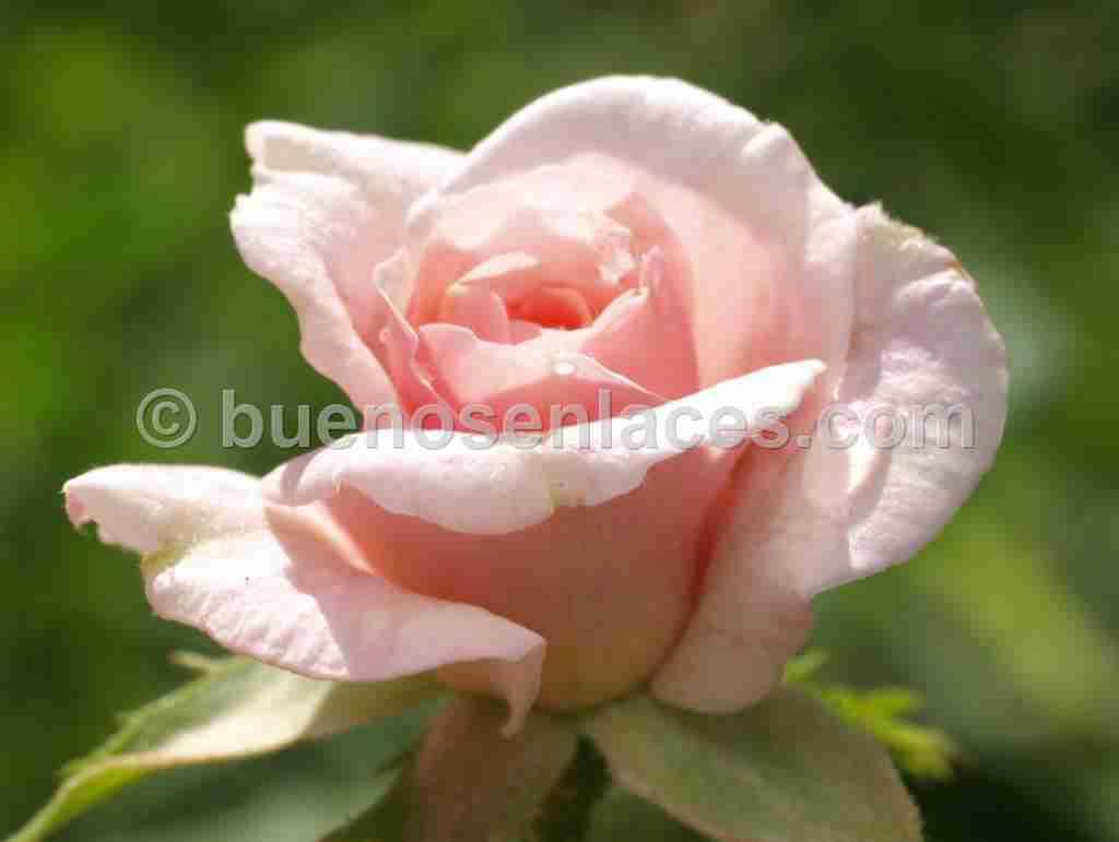 fotos de plantas ornamentales