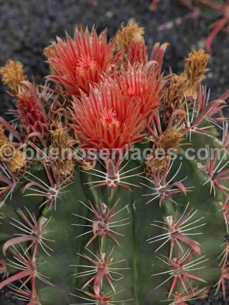 animales y plantas silvestres de baja california