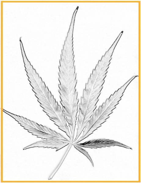 Ultima década - Cannabis: Imágenes, Sujetos, Discursos y