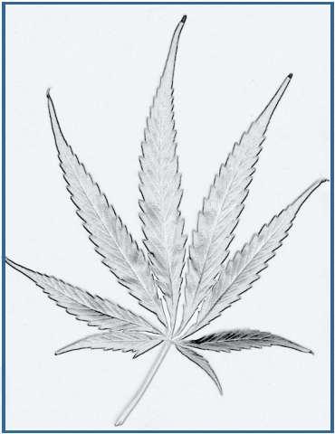 tatuajes de plantas